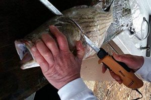 sample of ergonomic american fillet knife been used on a fish